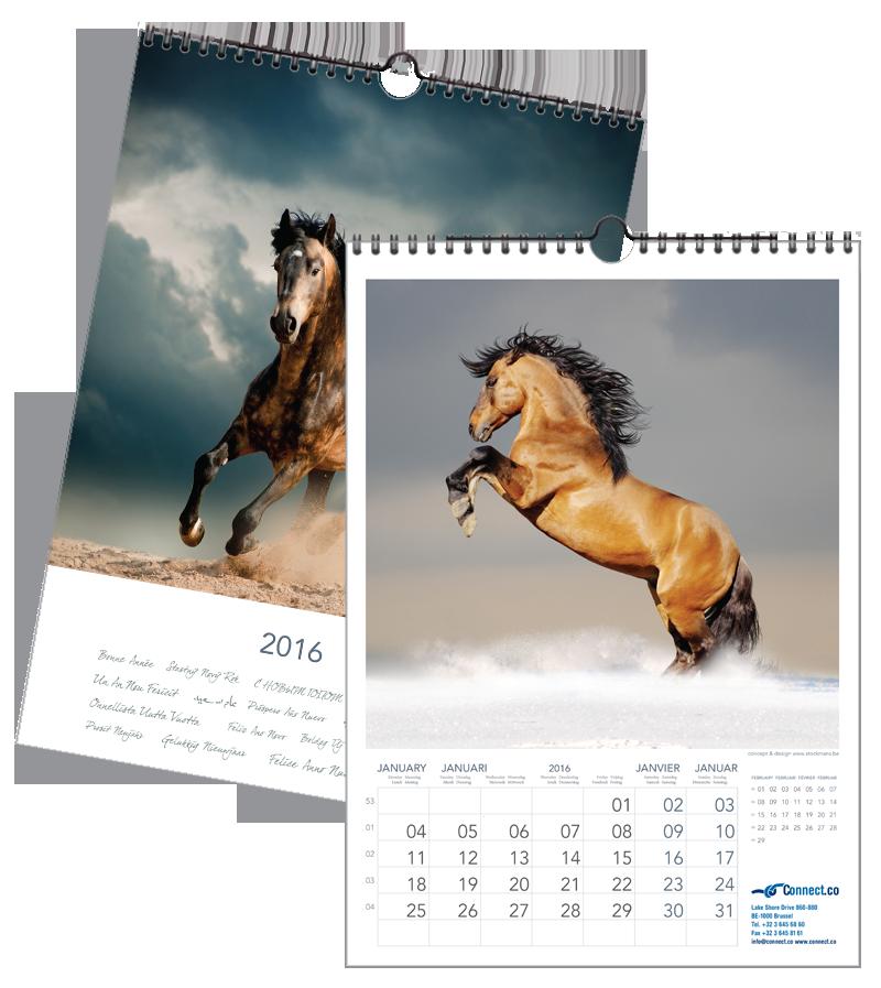 Paarden Krachtig | 297 x 420 mm