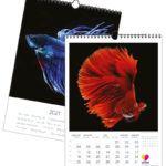 Fischen | 297 x 420 mm