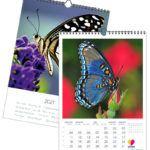 Schmetterling | 297 x 420 mm